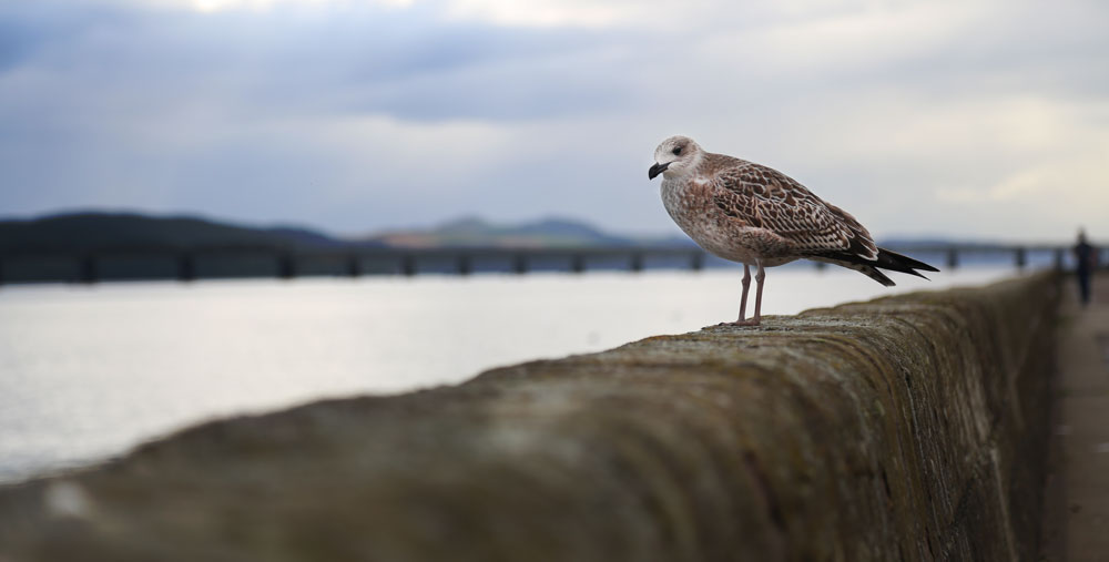 A Seagull in Dundee ©Samuel F.