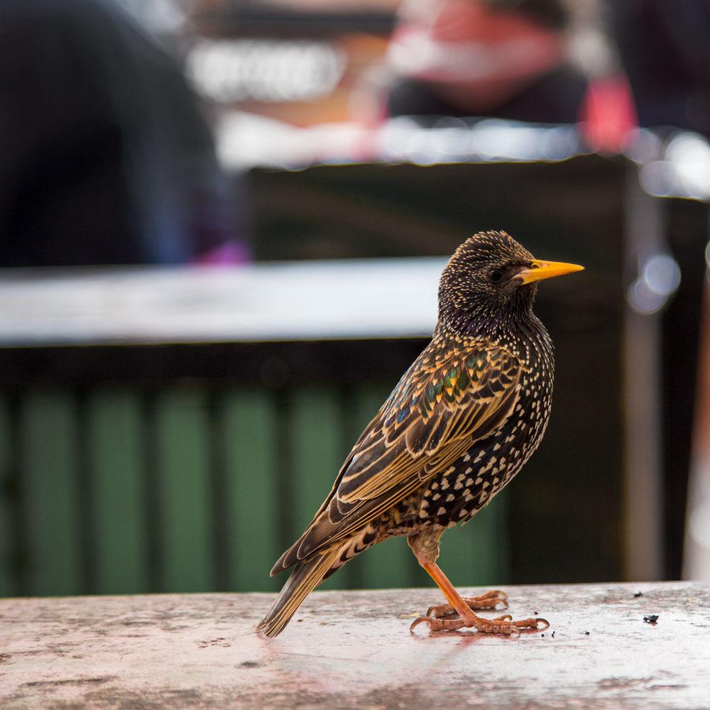 A sparrow in London ©Samuel F.