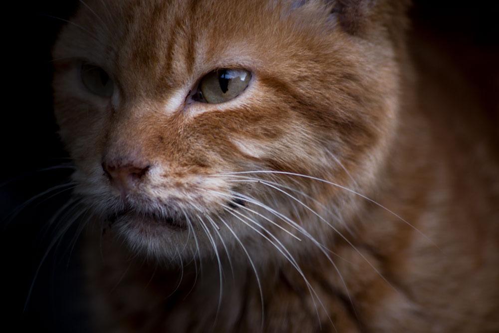 A Stray Cat in Taiwan ©Samuel F.