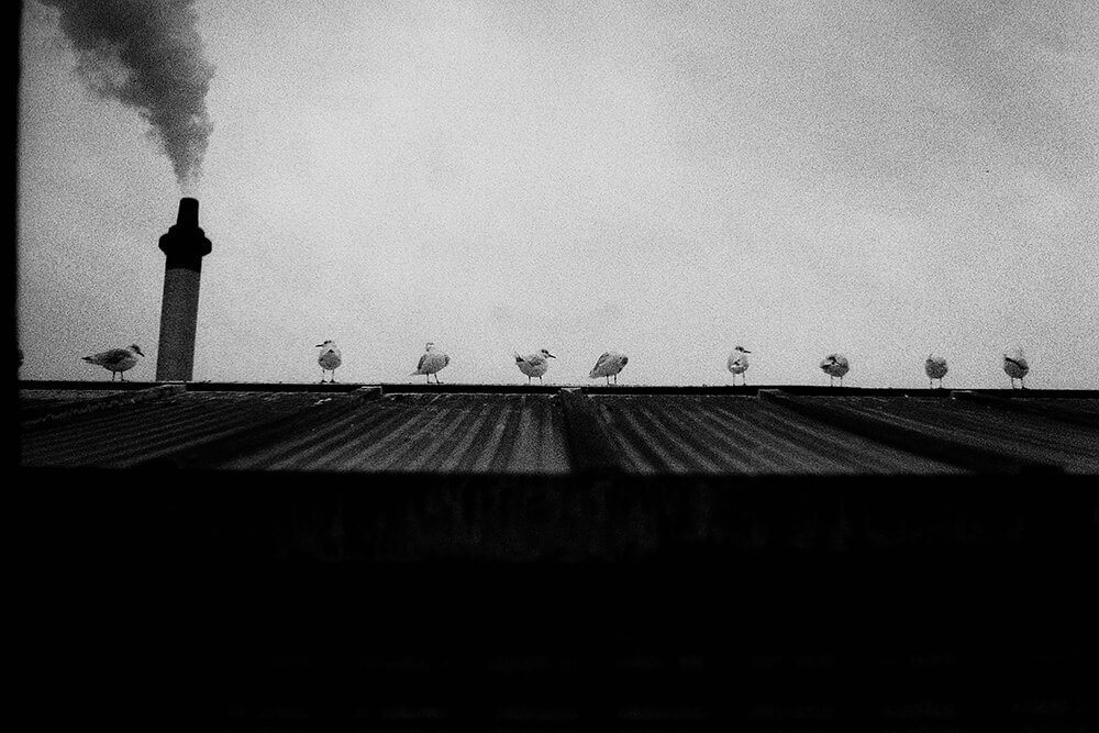 Seagulls overlooking the Glasgow Rowing Club ©Samuel F.