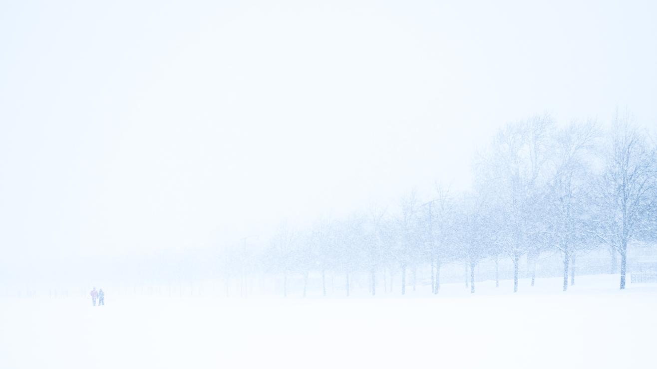 The white pines ©Samuel F.